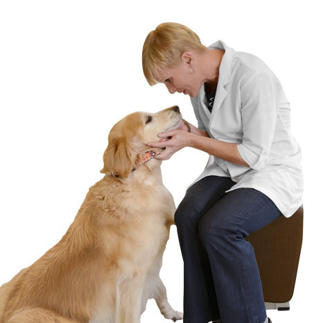 Dr. Stephanie Carraway, Animal Medical Clinic veterinarian Indialantic, Melbourne, Florida
