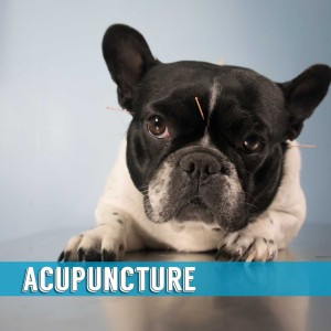 Acupuncture Indialantic
