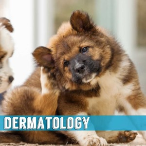 Dermatology Indialantic