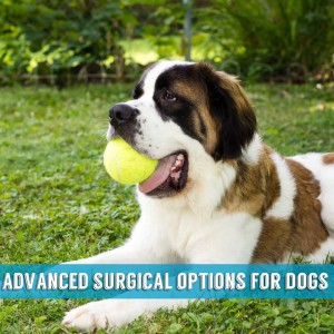 advanced surgical options indialantic