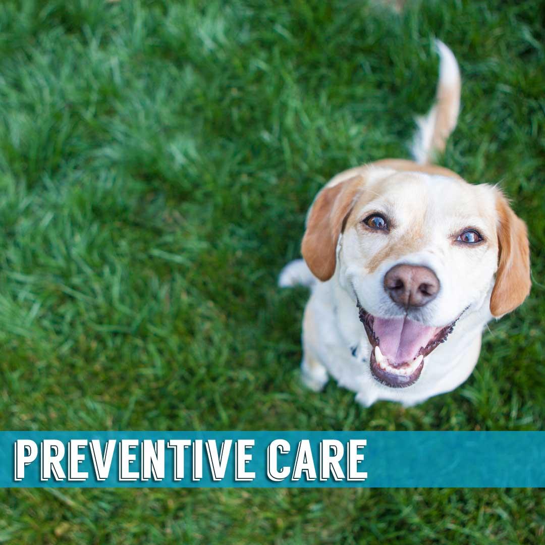 Preventative Care Indialantic