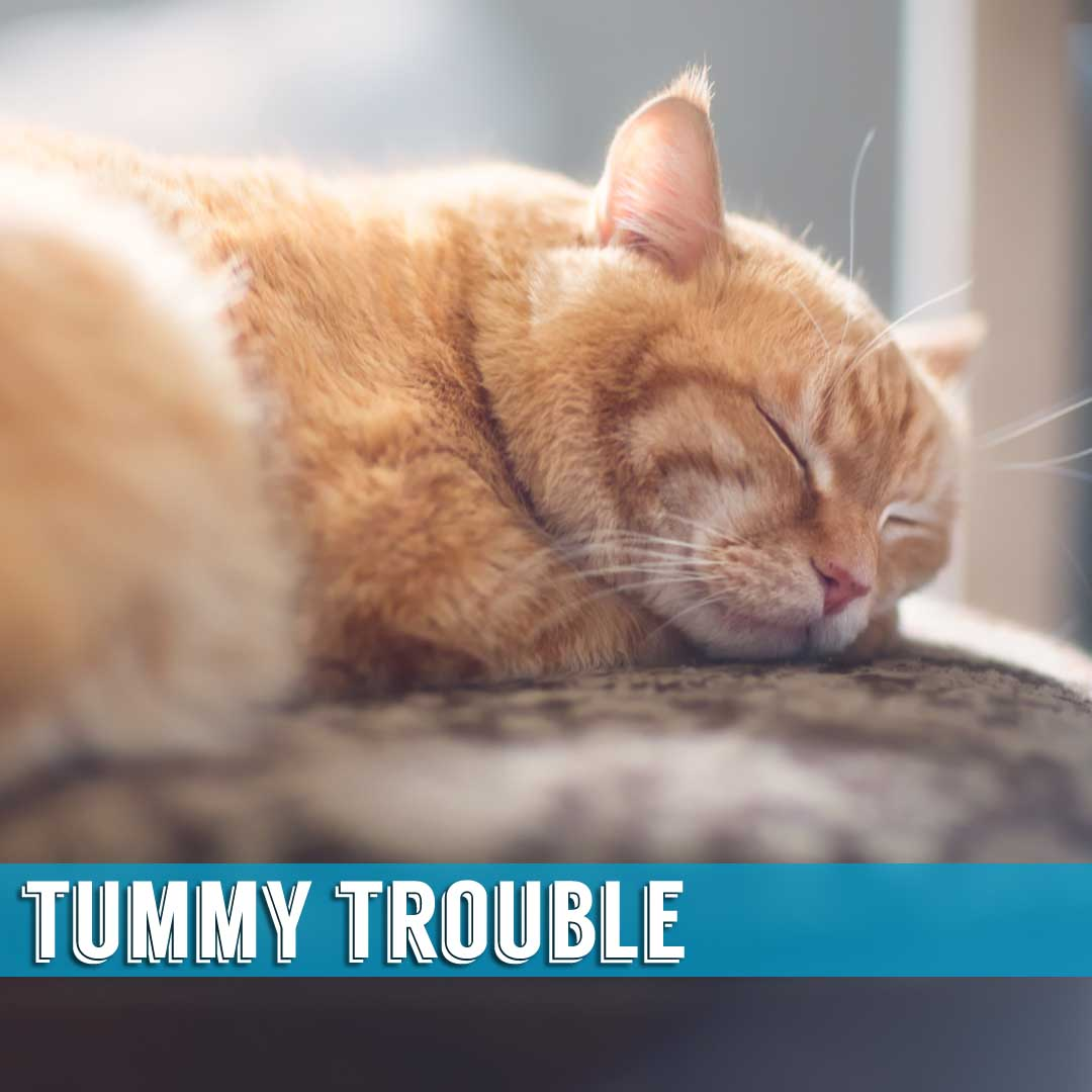 Tummy Trouble Indialantic