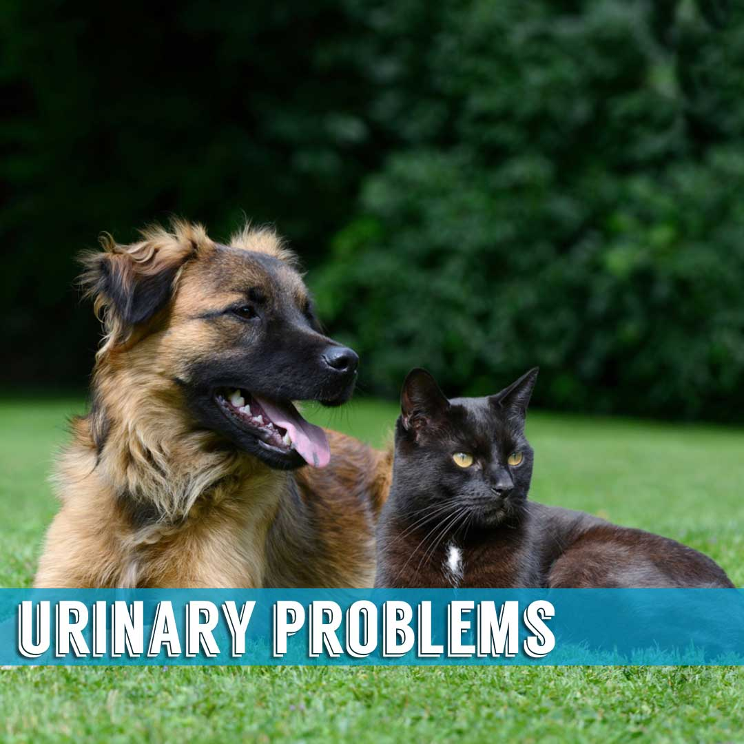 Urinary Problems Indialantic