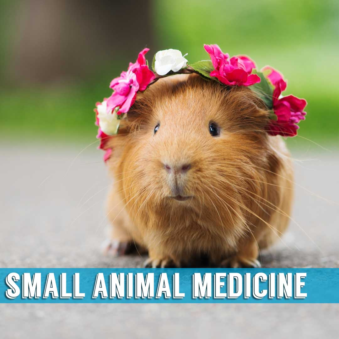 small animal medicine indialantic